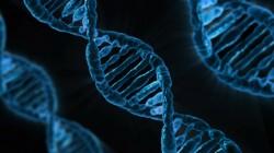 DNA Pixabay.com
